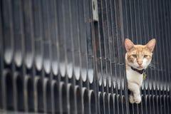 Katze zwischen den Stangen Stockfotografie