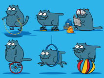 Katzeaktivitäten Lizenzfreie Stockfotos