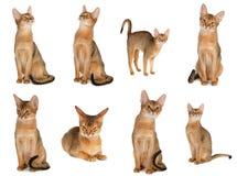 Katzeansammlung Lizenzfreies Stockbild