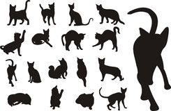 Katzeansammlung Lizenzfreie Stockbilder