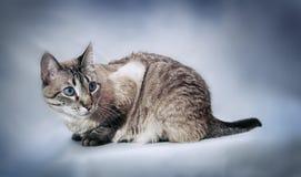 Katzeaufstellung Lizenzfreies Stockbild