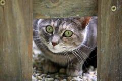 Katzeblick Lizenzfreies Stockfoto
