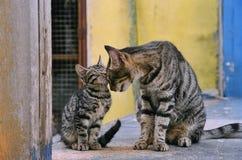 Katzefamilie lizenzfreie stockfotografie