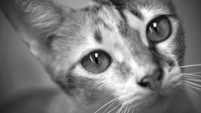 Katzefoto - bitte? Stockfoto