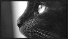 Katzefoto - Sehnsucht für Sie Stockbild