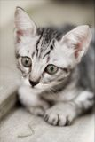 Katzefoto - spielen Sie mit mir? Stockbild