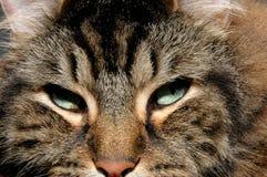 Katzegesicht lizenzfreie stockfotografie