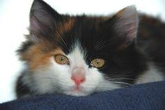 Katzegesicht Lizenzfreies Stockbild