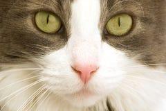 Katzegesicht Lizenzfreie Stockbilder