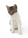 Katzekind Stockbild