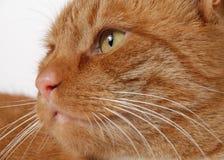 Katzekopf Stockbilder