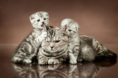 Katzen Stockbilder