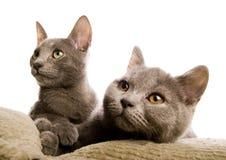 Katzen Stockfotos