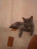 Katzen! Lizenzfreies Stockfoto