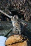 Katzen Lizenzfreies Stockbild