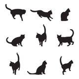 Katzen Lizenzfreie Stockfotos