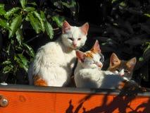 Katzen 1 Lizenzfreie Stockbilder