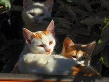 Katzen 2 Lizenzfreie Stockfotos