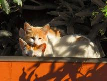 Katzen 3 Stockfoto