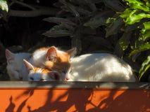 Katzen 4 Stockfotografie