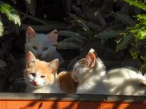 Katzen 5 Stockfotos