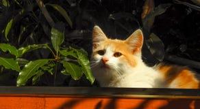 Katzen 9 Lizenzfreies Stockbild