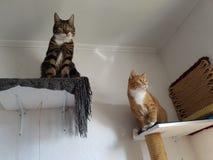 Katzen 免版税库存图片