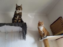 Katzen imagem de stock royalty free