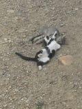 Katzen! Stockbilder