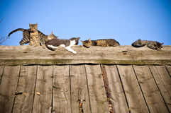 Katzen auf dem hölzernen Dach Stockbild