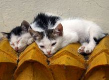Katzen auf einem Dach Stockbilder