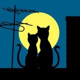 Katzen auf einem Nachtdach Stockfotografie