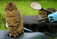 Katzen auf Fahrrädern Lizenzfreie Stockfotografie