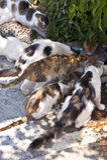Katzen auf Samos Lizenzfreies Stockfoto