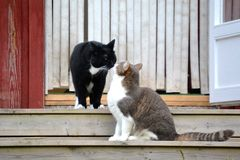 Katzen auf Treppe Stockfotos