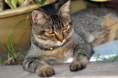 Katzen curiousity Auge lizenzfreie stockfotografie