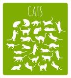 Katzen in den verschiedenen Haltungen Lizenzfreie Stockfotos