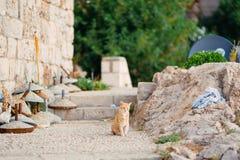 Katzen in der alten Stadt von Budva, Kotor, Dubrovnik Kroatien und Montag Stockfoto