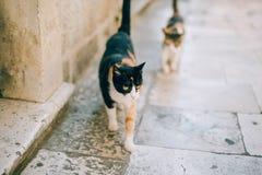 Katzen in der alten Stadt von Budva, Kotor, Dubrovnik Kroatien und Montag Lizenzfreie Stockfotografie