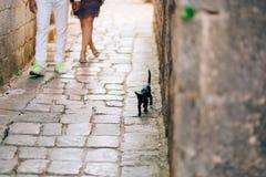 Katzen in der alten Stadt von Budva, Kotor, Dubrovnik Kroatien und Montag Lizenzfreie Stockfotos