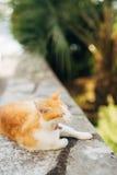Katzen in der alten Stadt von Budva, Kotor, Dubrovnik Kroatien und Montag Stockfotos