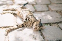 Katzen in der alten Stadt von Budva, Kotor, Dubrovnik Kroatien und Montag Stockfotografie
