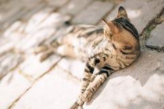 Katzen in der alten Stadt von Budva, Kotor, Dubrovnik Kroatien und Montag Stockbild