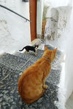 Katzen in der Gasse Amalfi Lizenzfreie Stockfotos