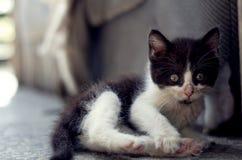 Katzen in der Küche lizenzfreies stockfoto