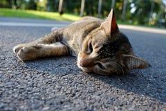 Katzen, die auf dem Weg im Garten schlafen Lizenzfreie Stockbilder