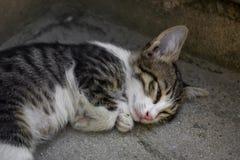 Katzen, die auf der Straßentreppe schlafen stockfoto