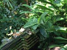 Katzen, die auf einer alten Wand in Ubud, Bali, Indonesien schlafen Lizenzfreies Stockfoto