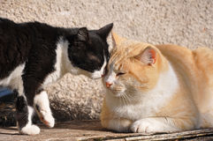 Katzen, die an der Sonne spielen Stockfotos