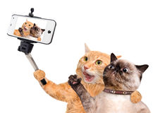 Katzen, die ein selfie mit einem Smartphone nehmen Stockfoto